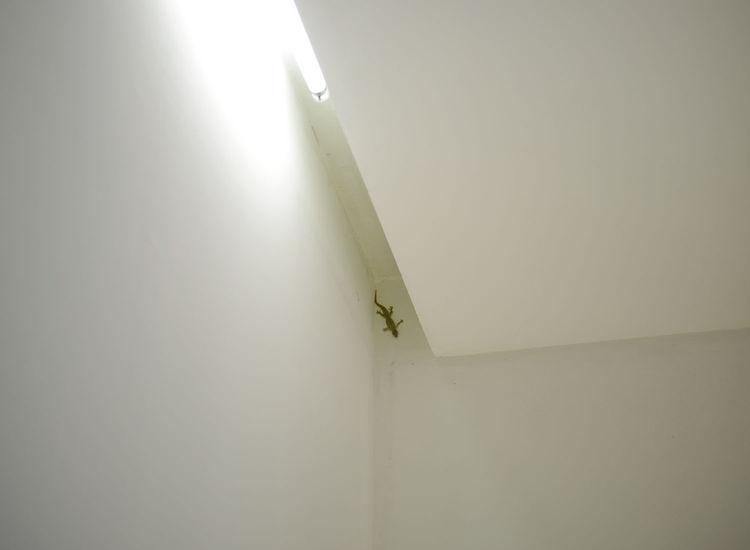 wisnu-residence-extended-lizard